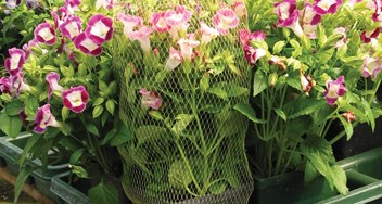 Potted Plant Bags. Garden and Nursery.JPG