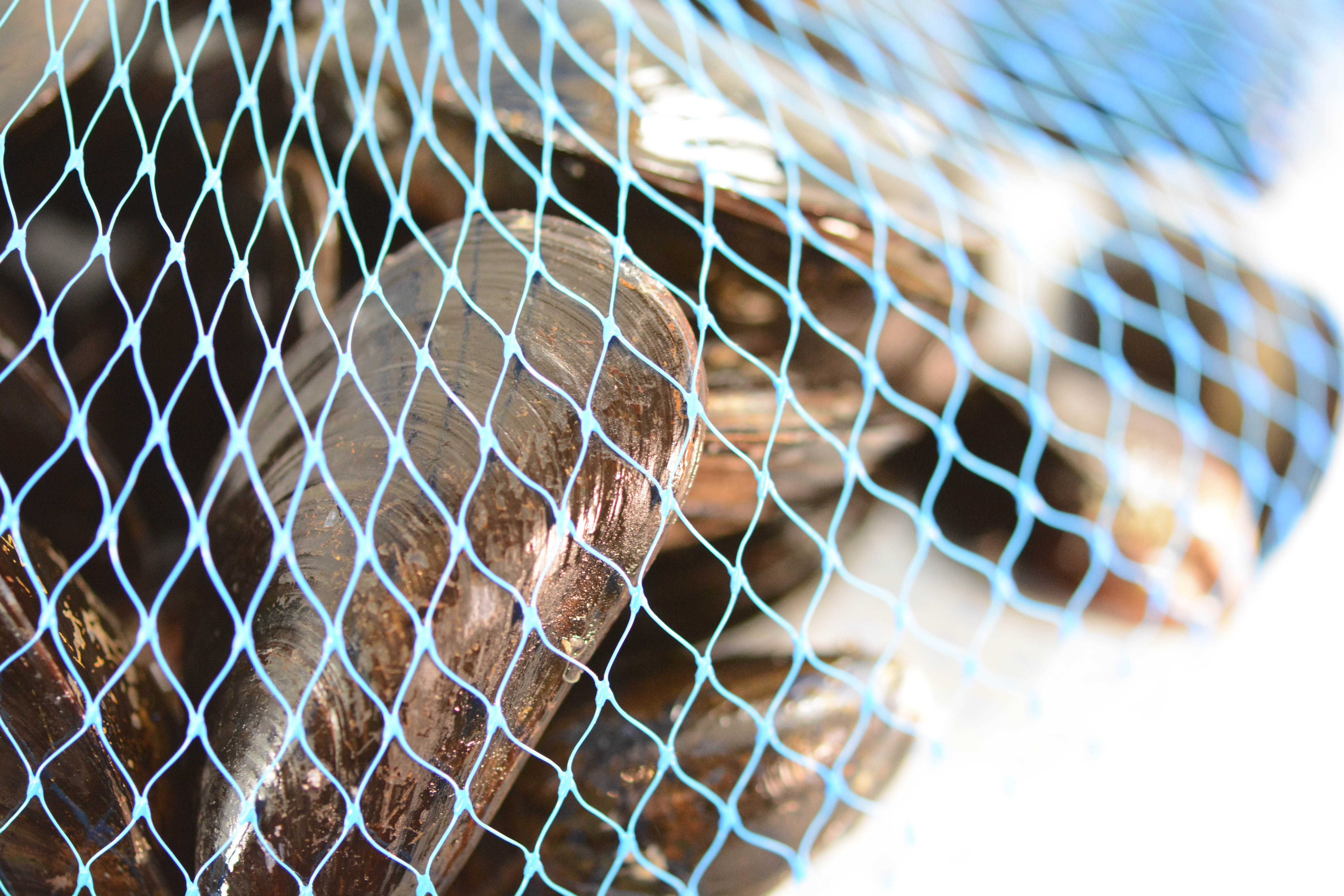 Meat, Poultry and Shellfish Mesh